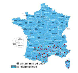 carte_leishmaniose